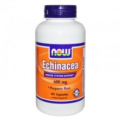 Ехинацея Echinacea