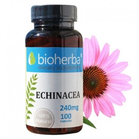 Ехинацея 240 mg
