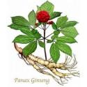 Жен-шен (Panax Ginseng)